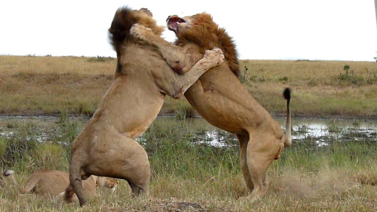 Animals & Wildlife Videos